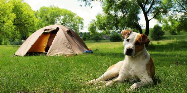 dogs camping and cabins