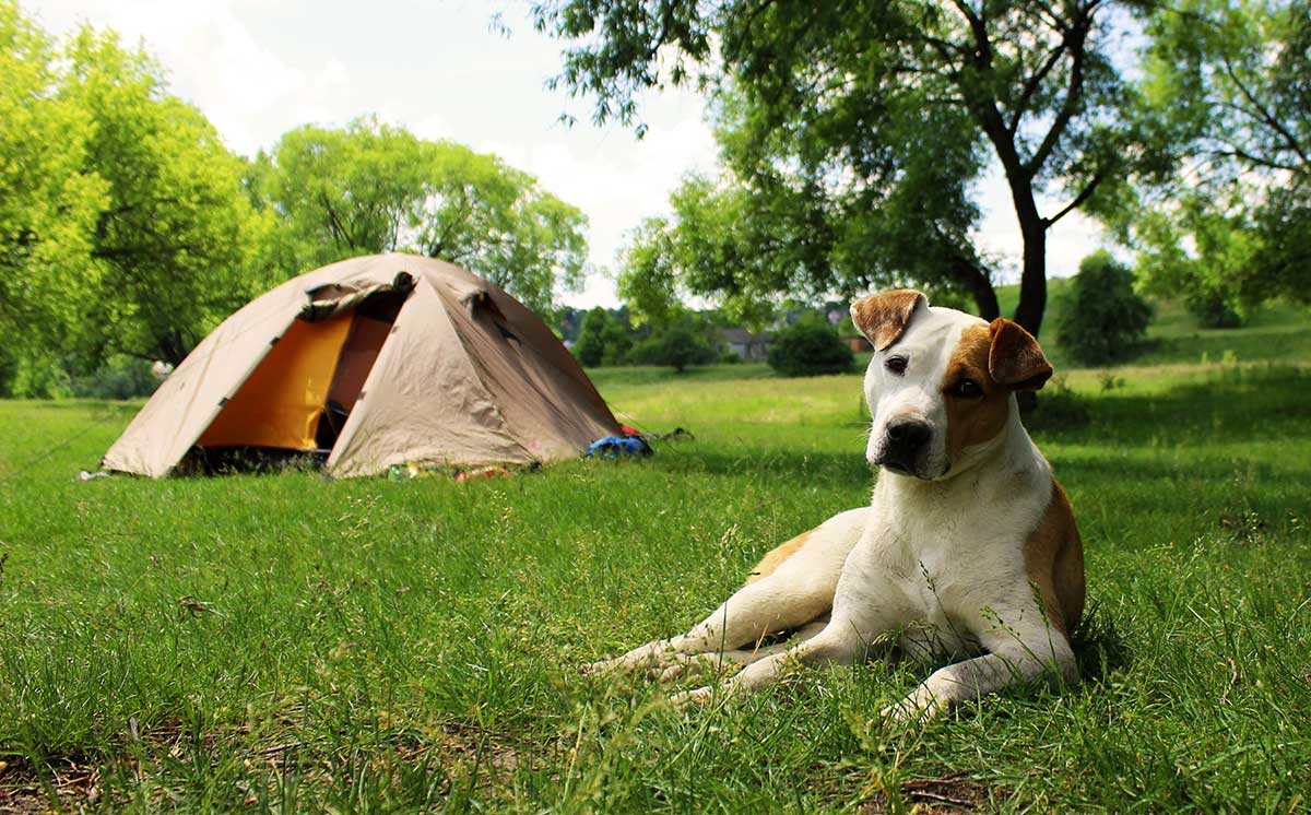 Dog sat by a tent at YHA