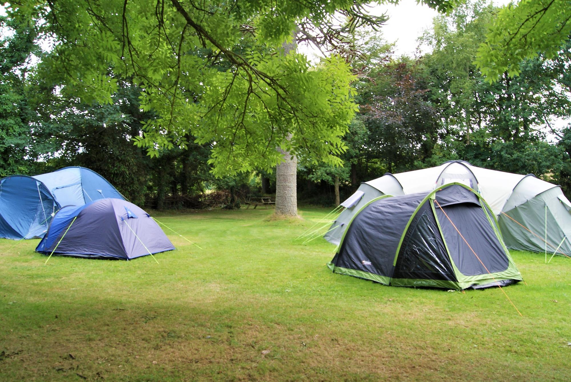 4 tents in campsite in Cornwall