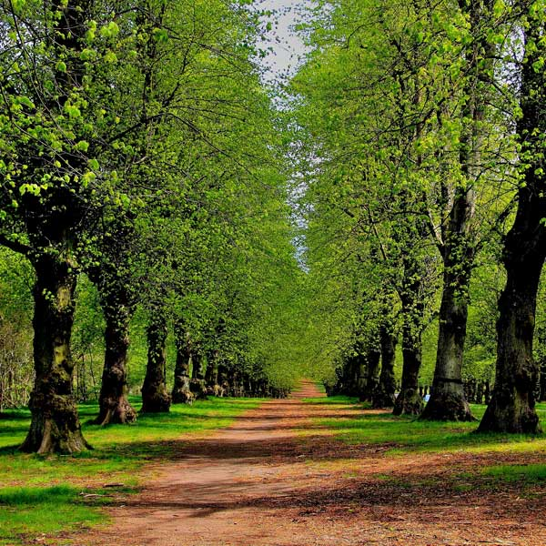 View along a path in Clumber Park, Nottinghamshire